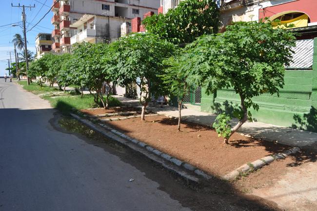 concreto-habana-2013-3