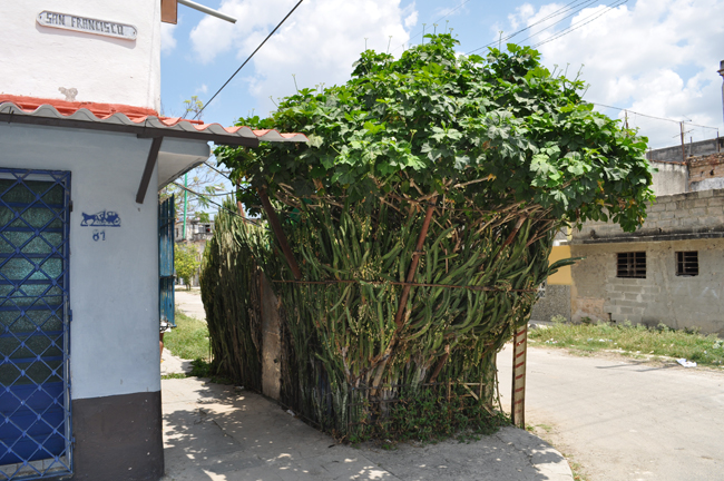 Untitled (Habitat cell made out with euphorbia trigona shrubs and an aluminum door), 2012